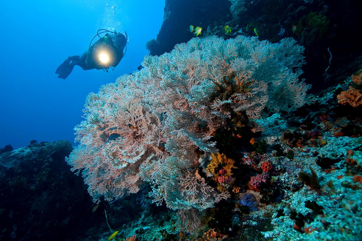 underwater_13_highres