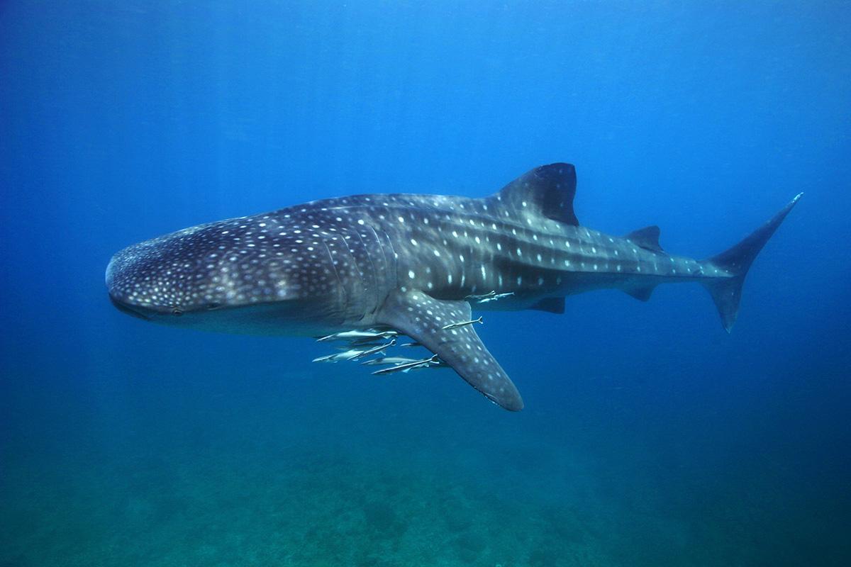 underwater_25_highres