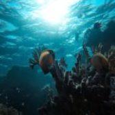 Наше море, наша история: PHIDEX 2021 погружается в цифровую среду